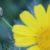 ריפוי עצמי 4 – מה שאנחנו מכניסים לפה